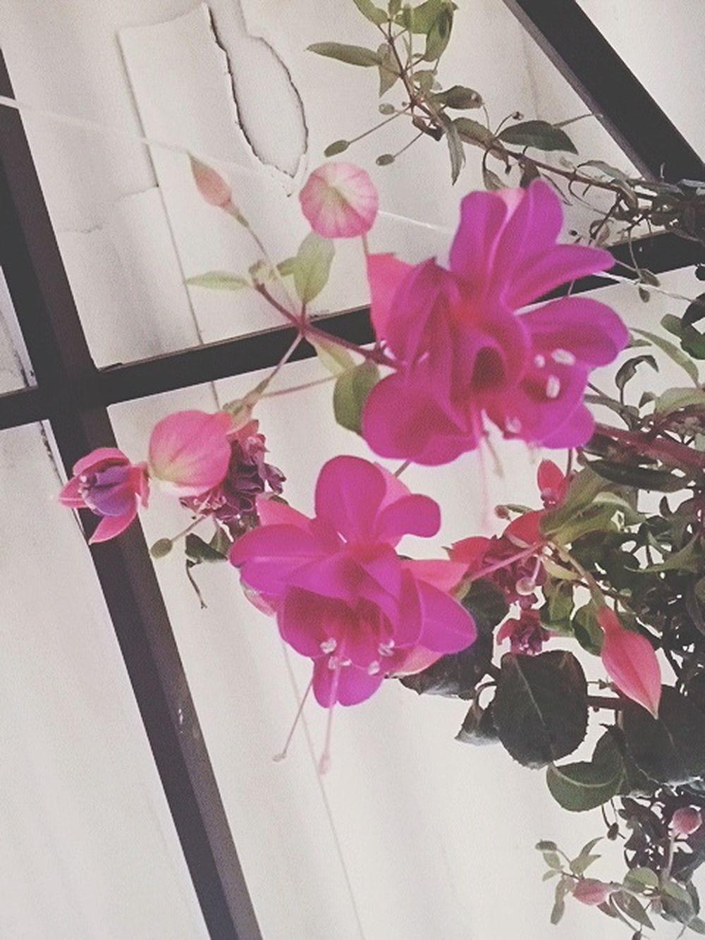 Flowers Caqueza Natural Beauty