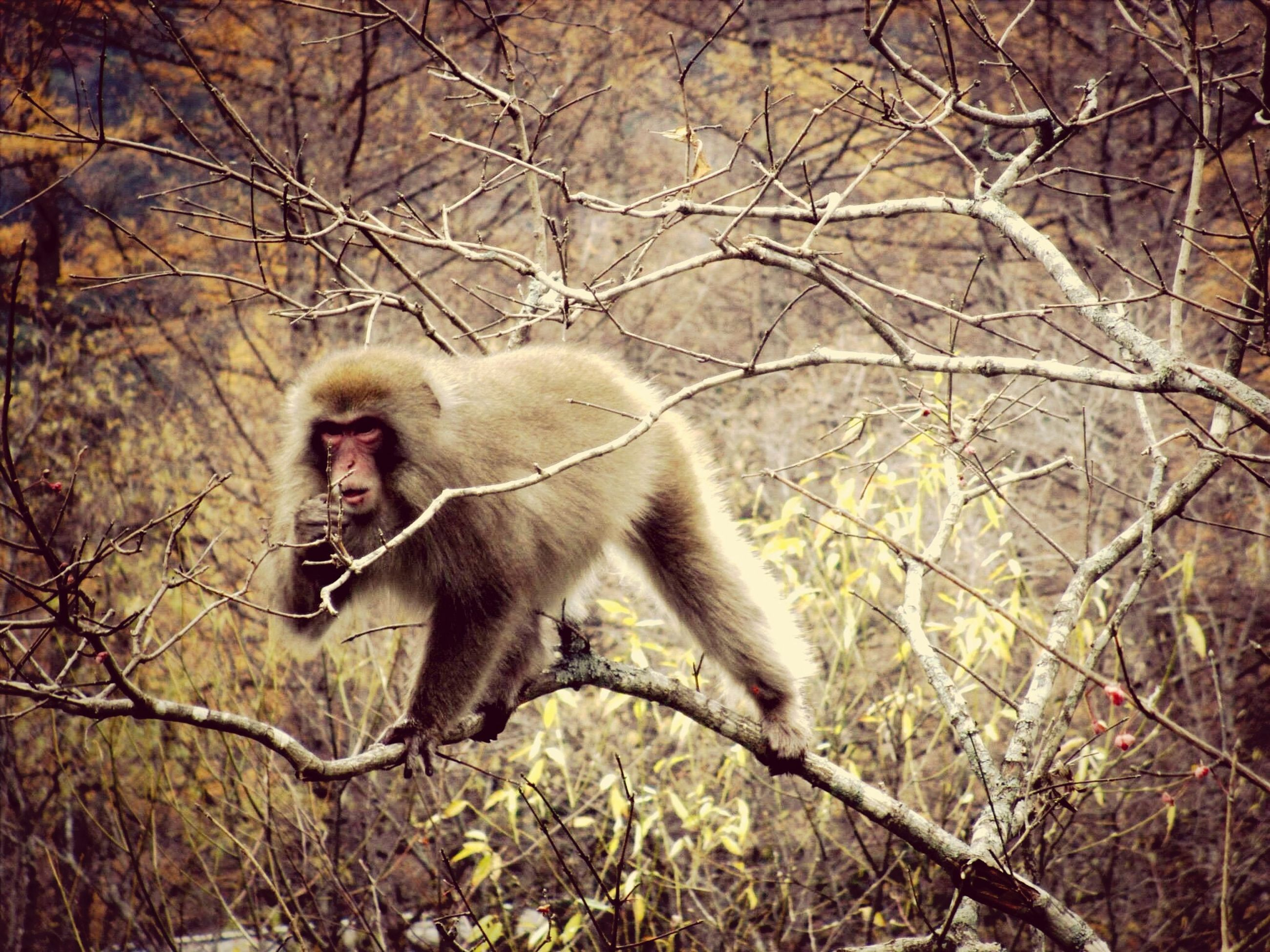 animal themes, tree, branch, mammal, one animal, wildlife, bare tree, animals in the wild, full length, nature, forest, tree trunk, monkey, day, outdoors, sitting, standing, young animal, field, no people