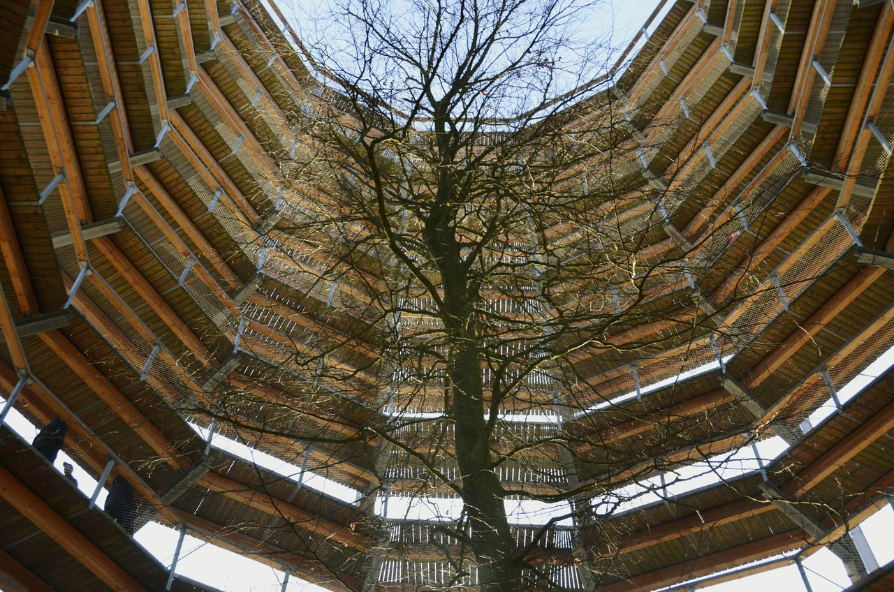 Low Angle View Architecture No People Built Structure Tree Day Sky Man Made Structure Uniqueness Eye4photography  EyeEm Masterclass Shootermag Looking Up Look Up And Thrive Majestic Backlight