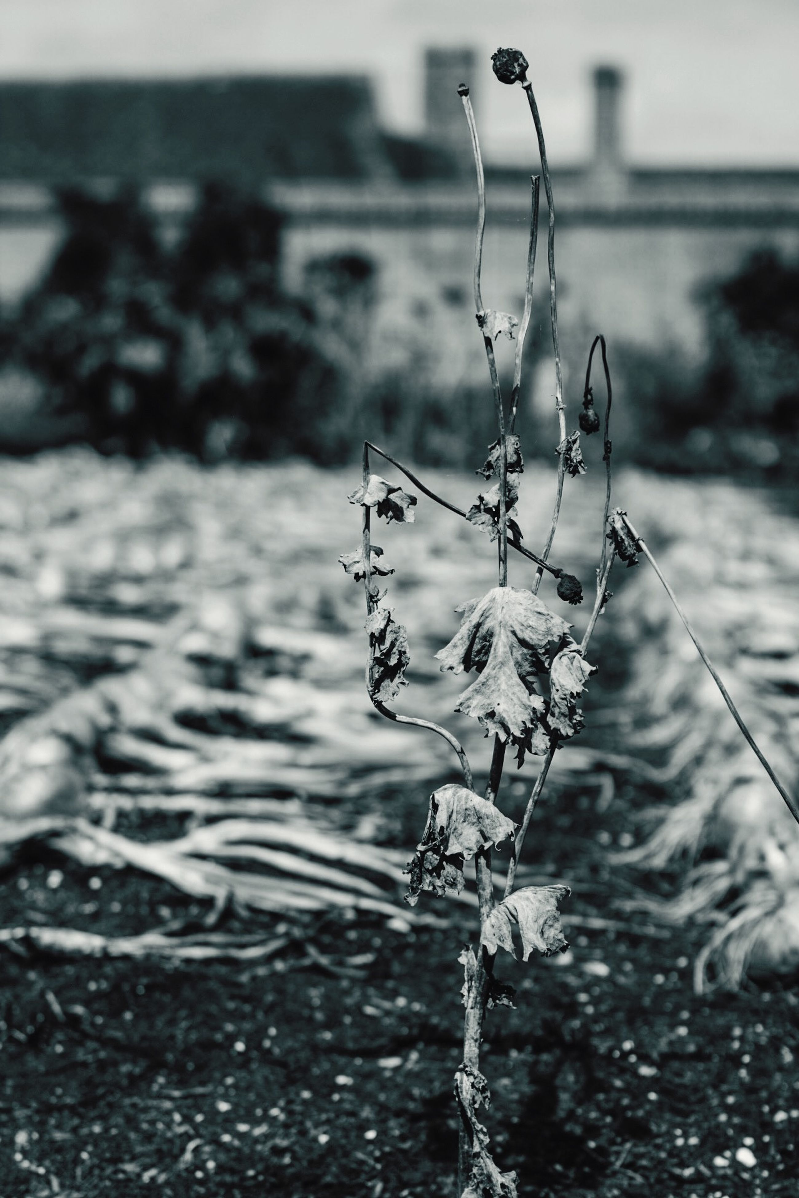 water, focus on foreground, flower, close-up, plant, nature, selective focus, stem, fragility, day, freshness, growth, outdoors, no people, sunlight, reflection, twig, beauty in nature, built structure, growing