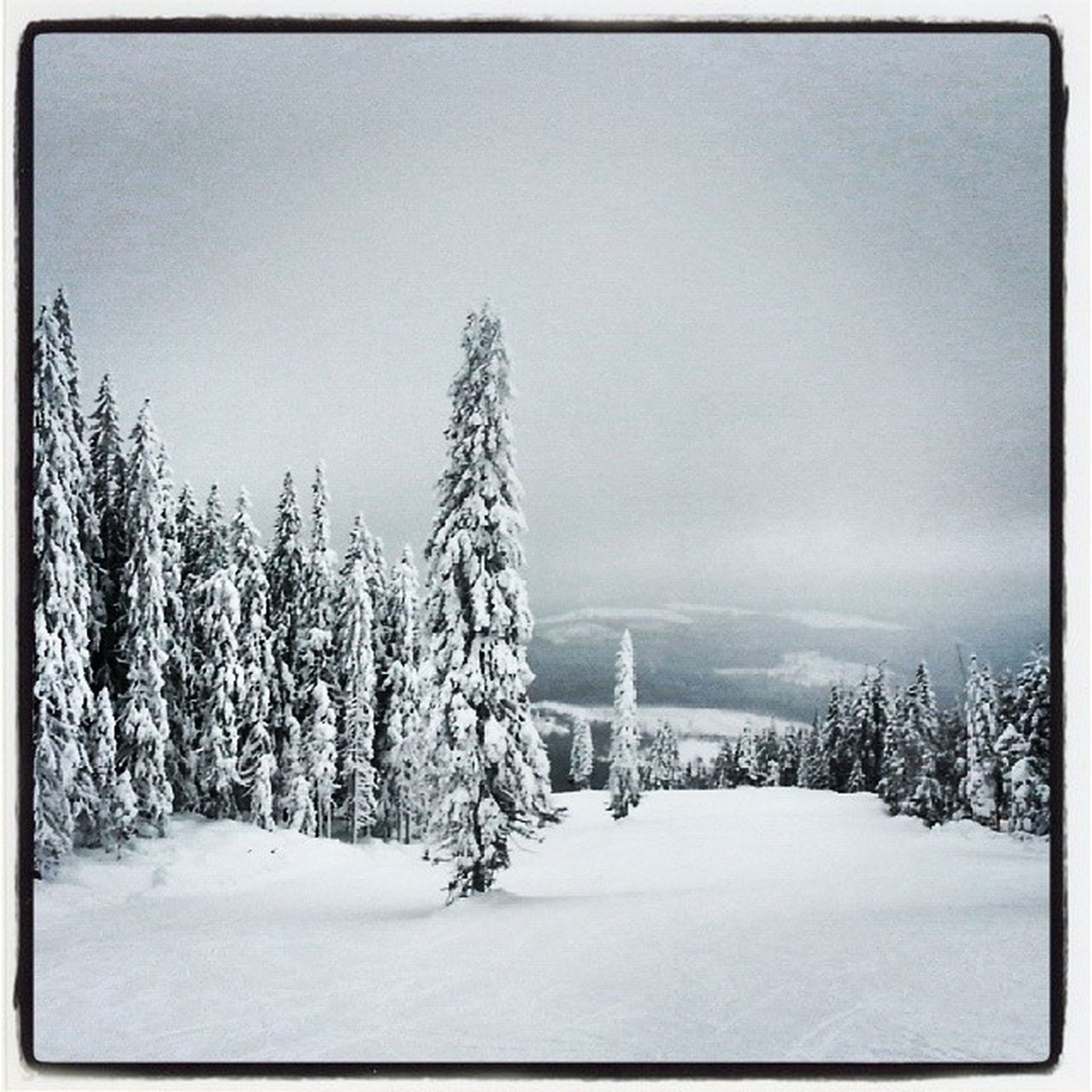 More snow! Rommealpin Romme_alpin Rommé Winter snow trees forest cold sweden dalarna ninacombat skiing