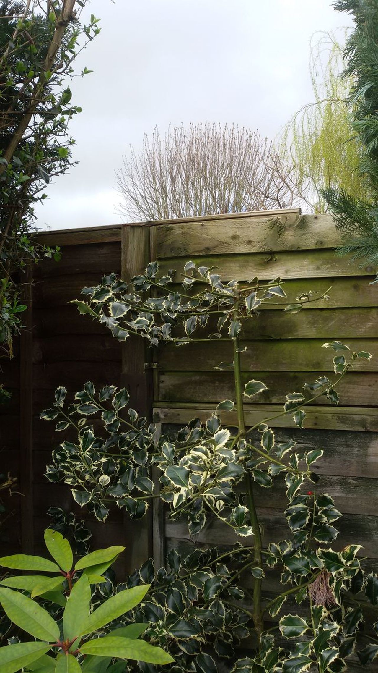 Garden plants. Plants Garden Green Fence Nature Leafs Leafscape Branches Bushes