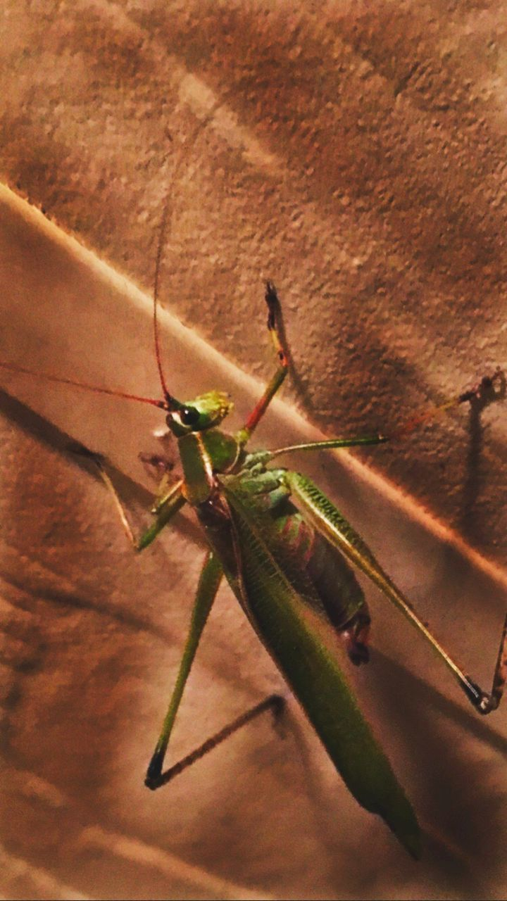 animals in the wild, one animal, animal themes, insect, animal wildlife, no people, close-up, day, outdoors, nature