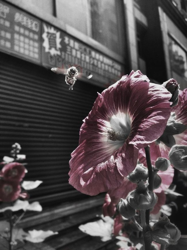 Blackandwhite Monochrome Snapseed Vocscam