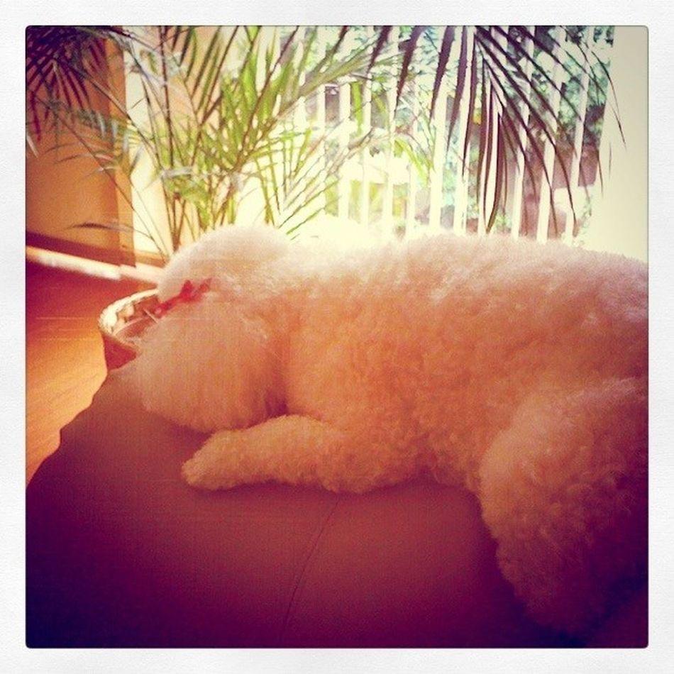 The sweet waiting Igers IgersVenezuela Waitingformom Dog shira