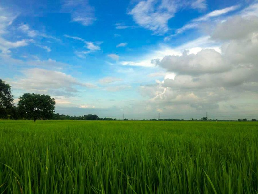 Hidden Gems  Nuevaecija Philippines Farmlife Greenfields Nature Nature_collection Nature Photography Clouds And Sky Naturelovers Check This Out Colour Of Life Itsamazingoutthere Travel Destinations Sky_collection Pinoy Travelphotography Landscape_photography Awesome_shots Landscapes Naturephotography Beautifuldestinations Landscape Southeastasia Itsmorefuninthephilippines