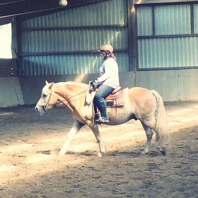 Armani❤ Reiten Haflinger Western Riding