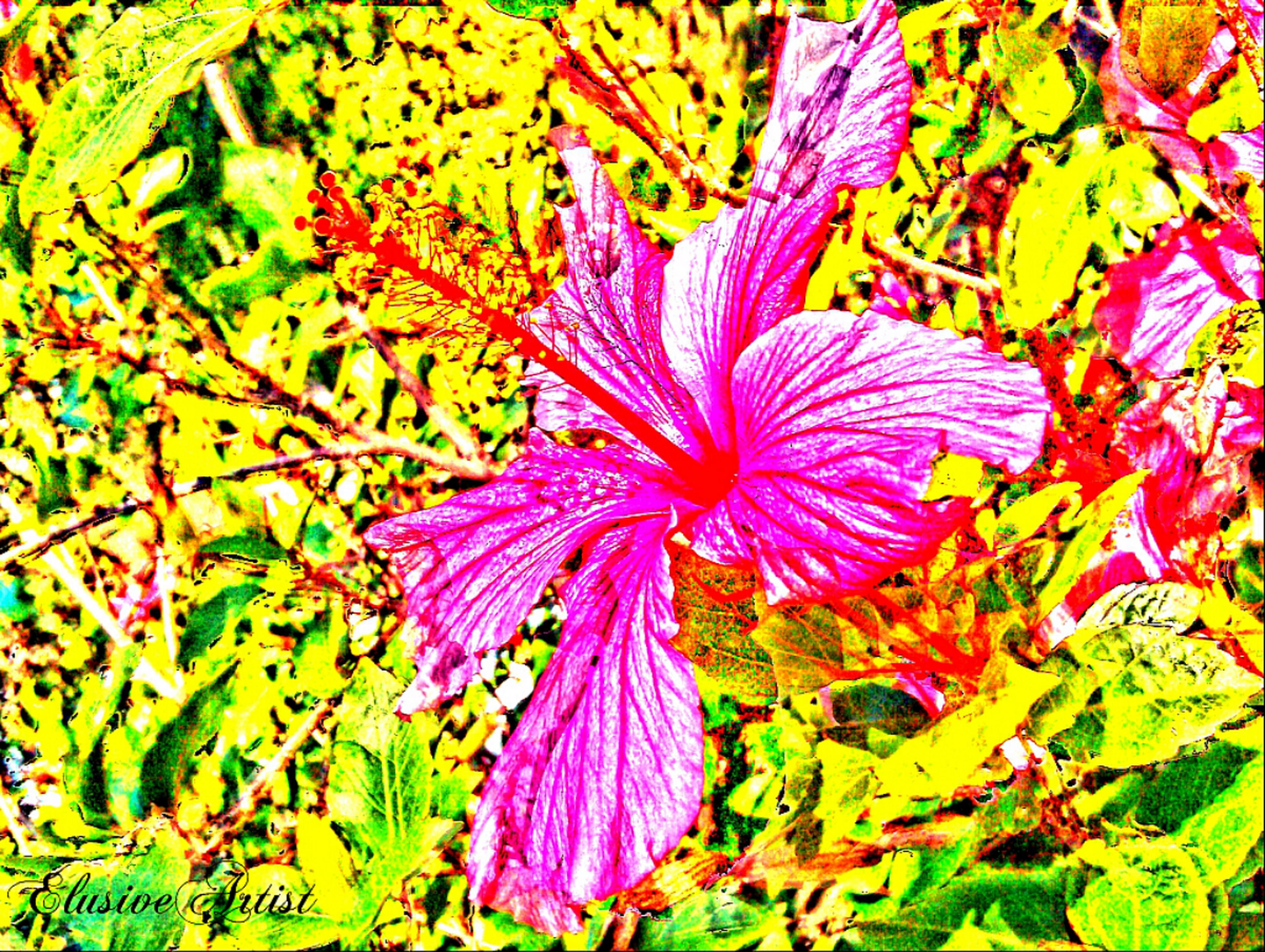 flower, freshness, leaf, fragility, growth, full frame, beauty in nature, petal, backgrounds, nature, purple, close-up, pink color, season, high angle view, flower head, plant, multi colored, day, outdoors