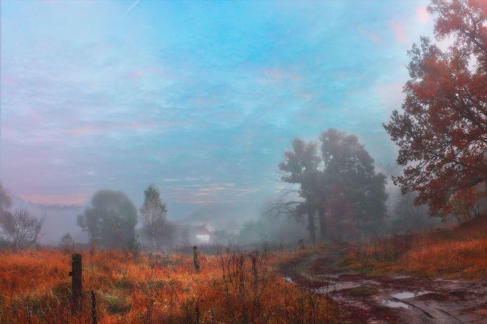 Nature Landscape Filtres Et Couleurs