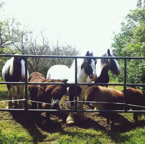Friends My Little Pony Donkey Time Normandie