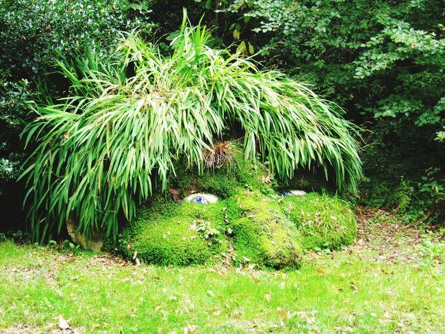 Giant's Head, Lost Gardens of Heligan Gardens ArtWork Cornwall
