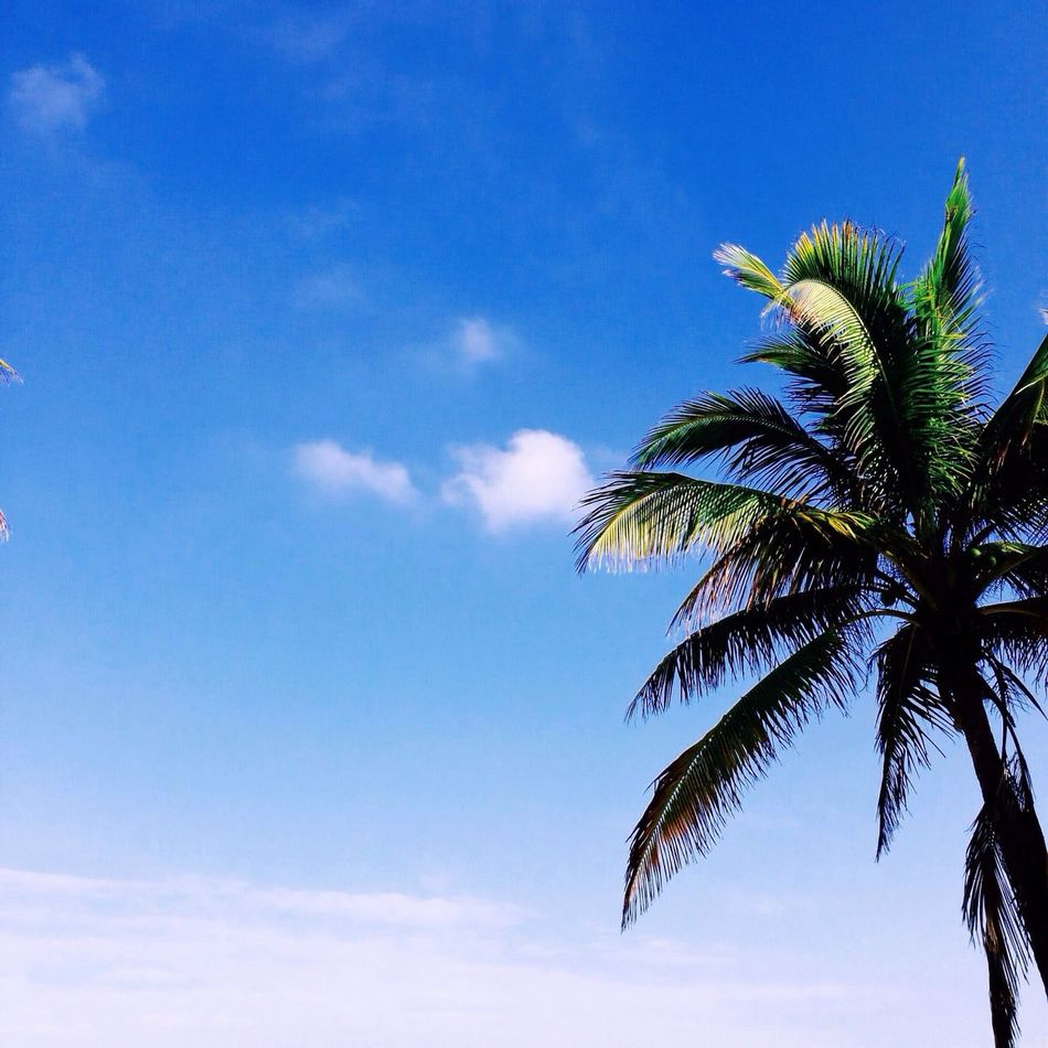 Beautiful stock photos of jamaica, Beauty In Nature, Cloud, Day, Low Angle View