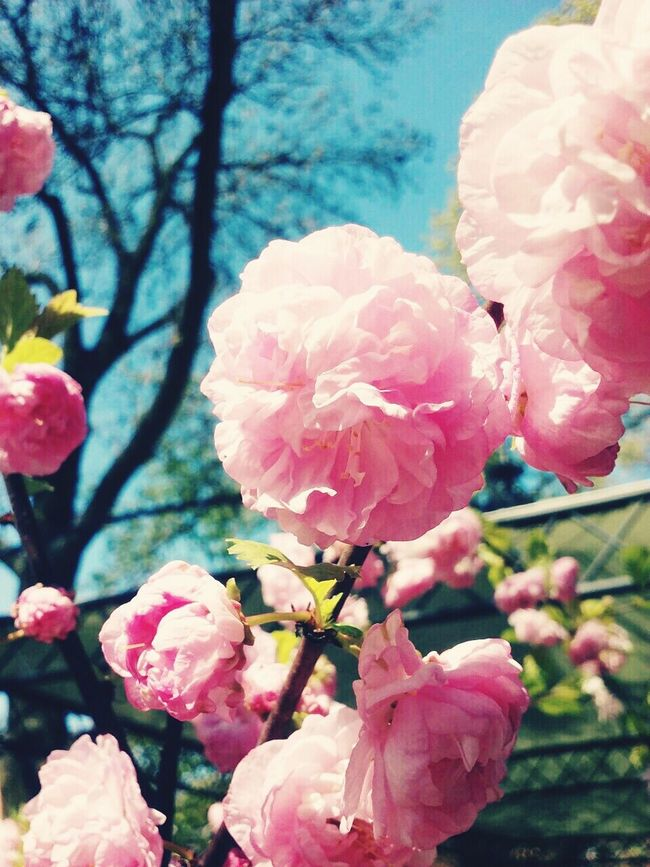 Rose🌹 Rosé Rose♥ Rose - Flower Roses🌹 Roses Flowers  Roses Roses, Flowers, Nature, Garden, Bouquet, Love, Nature Sky Pink