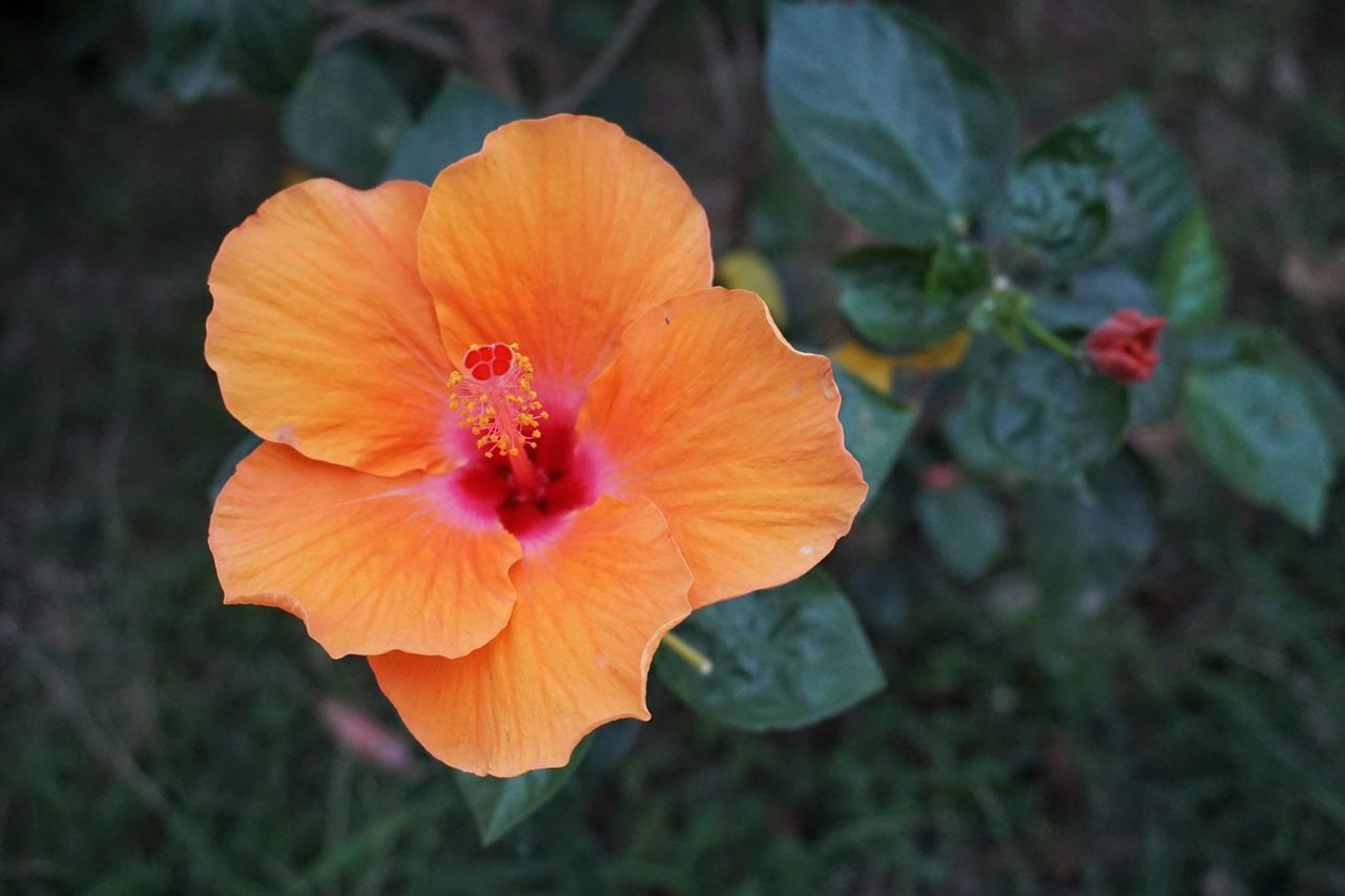Flower Flower Head Orange Color Beauty In Nature Flowers Flowers,Plants & Garden Flower Collection Thailand