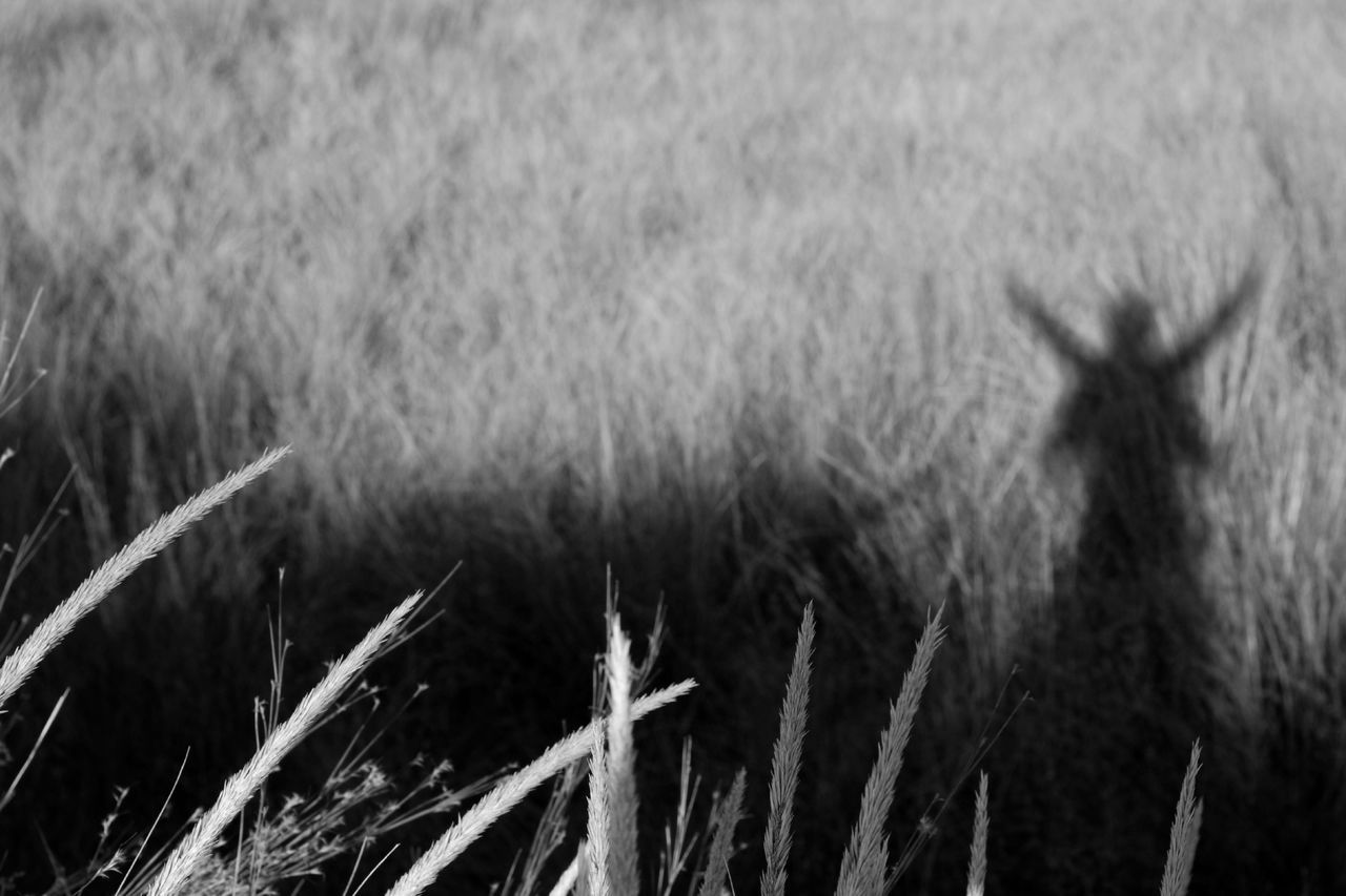 Butterfly Wings Agriculture Beauty In Nature Black & White Black And White Blackandwhite Cereal Plant Close-up Day Field Grass Growth Landscape Monochrome Nature No People Outdoors Plant Portrait Of A Woman Rural Scene Self Portrait Shadow Shadowplay Tranquility Wheat Place Of Heart