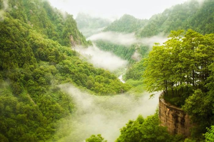 Mountain Cloud Green Color Nature Beauty In Nature Forest Scenics Japan Architecture Tree Woods