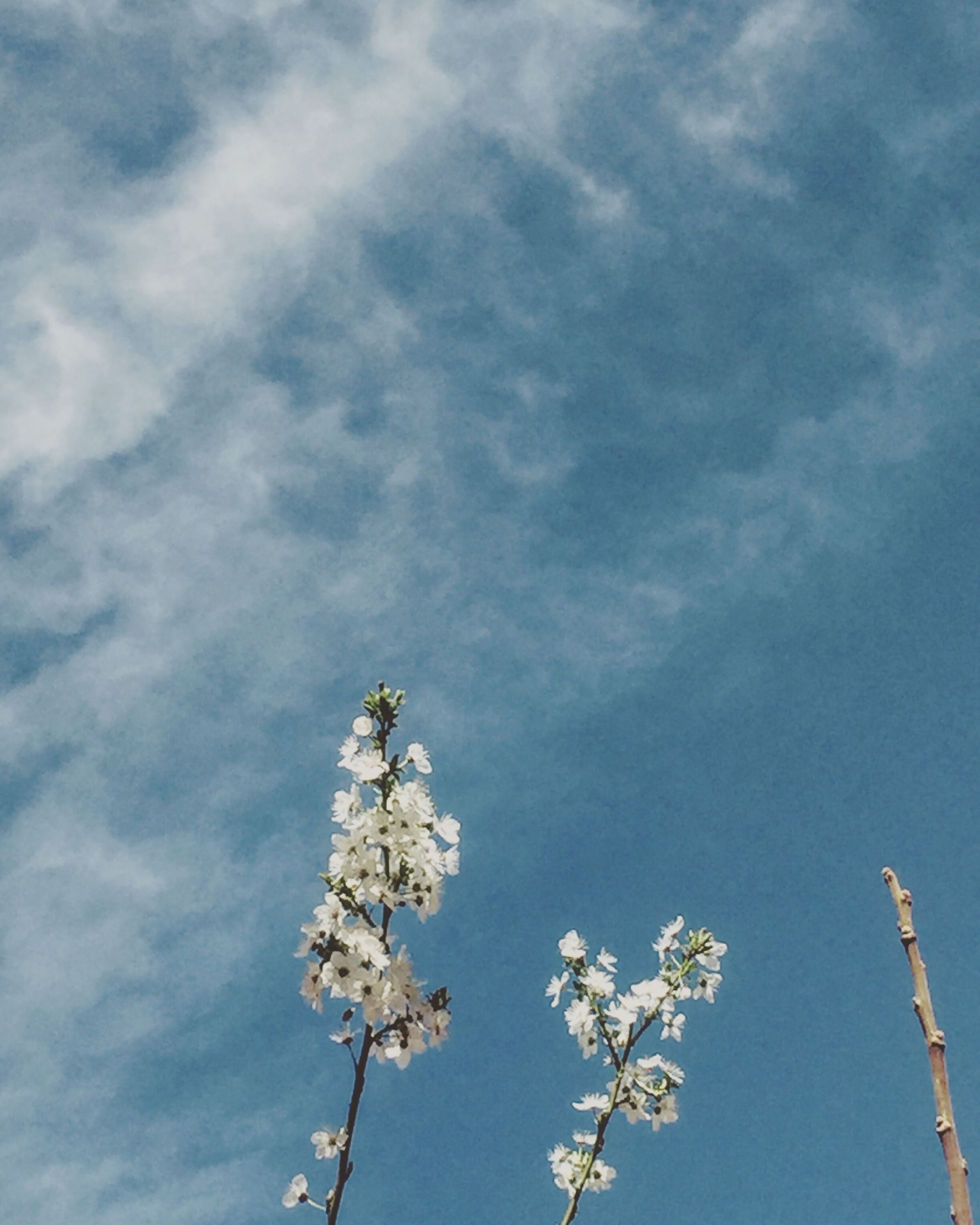 sky, low angle view, cloud - sky, growth, nature, tree, no people, flower, day, outdoors, beauty in nature, fragility, treetop, freshness