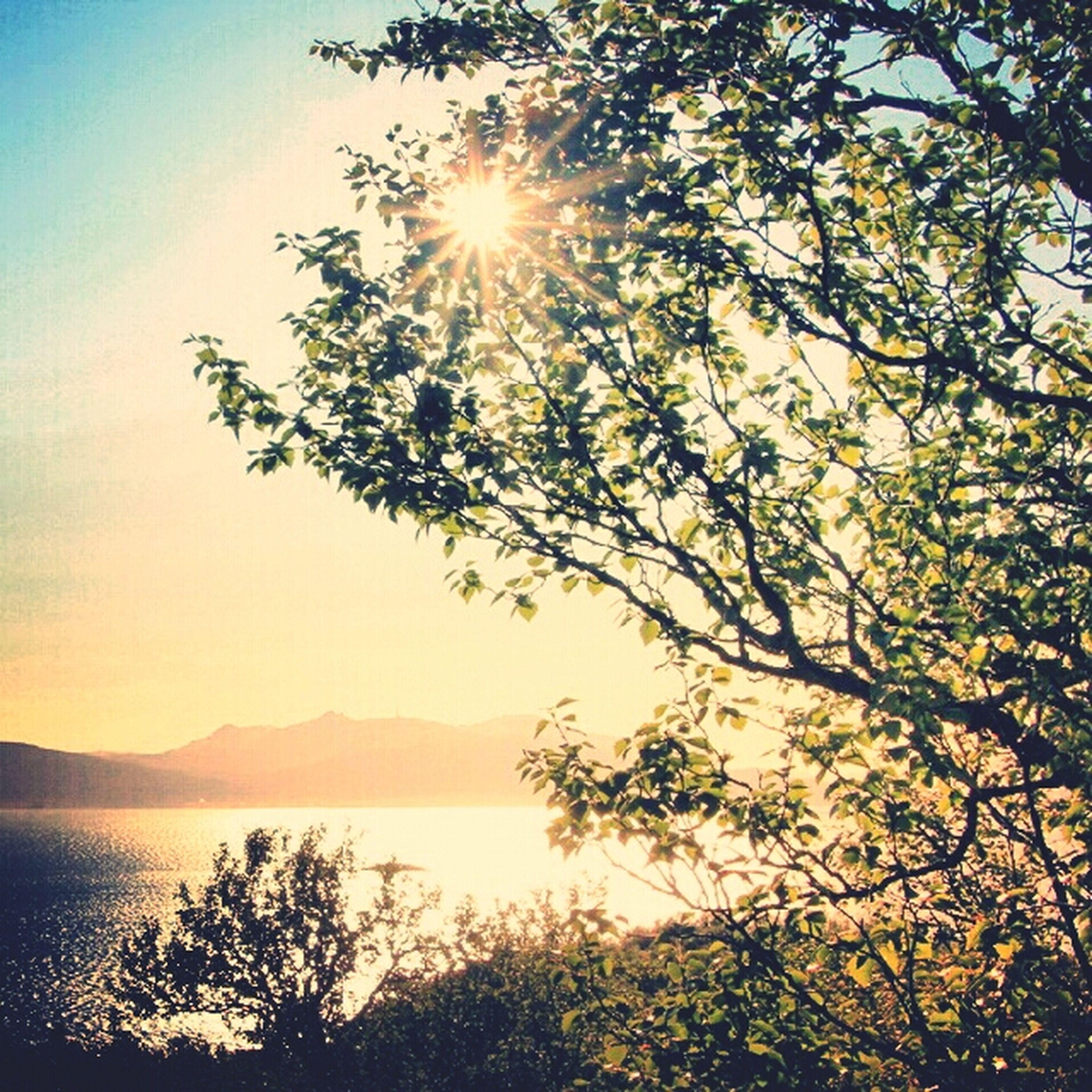 sun, tranquility, tranquil scene, water, tree, scenics, sunlight, beauty in nature, sunbeam, nature, lens flare, sky, mountain, sunset, lake, reflection, idyllic, branch, growth, sea