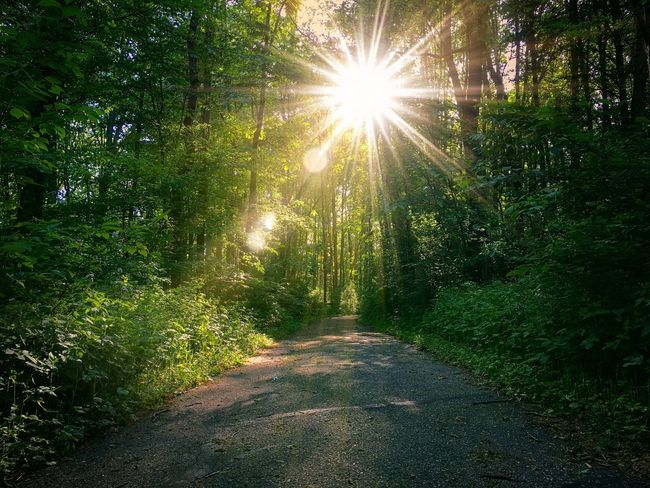 Forest sun flares. Sunbeam Lens Flare Sunlight Nature Tree Sun The Way Forward Forest Tranquility Outdoors No People Beauty In Nature Growth Day Scenics