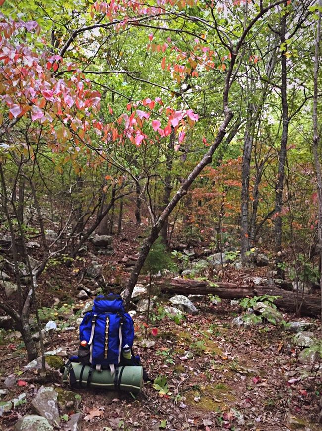 Camping Hiking Backpack Kelty Woods Fall Tree