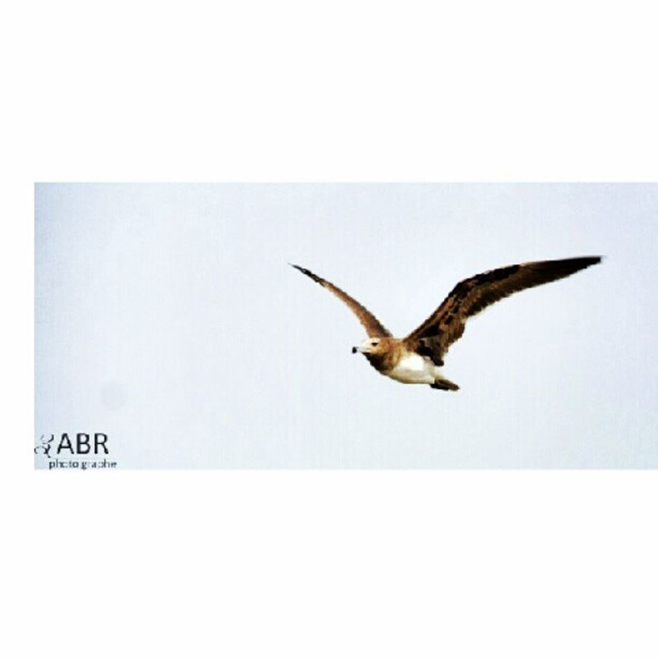 Image Bird Gull Qahma Jazan, Saudi Arabia Red Sea Waves stone Camcorder Canon 50d ksa camera صورة طائر النورس القحمة جازان المملكة العربية السعودية امواج البحر الاحمر حجر كاميرة كانون 50d ksa