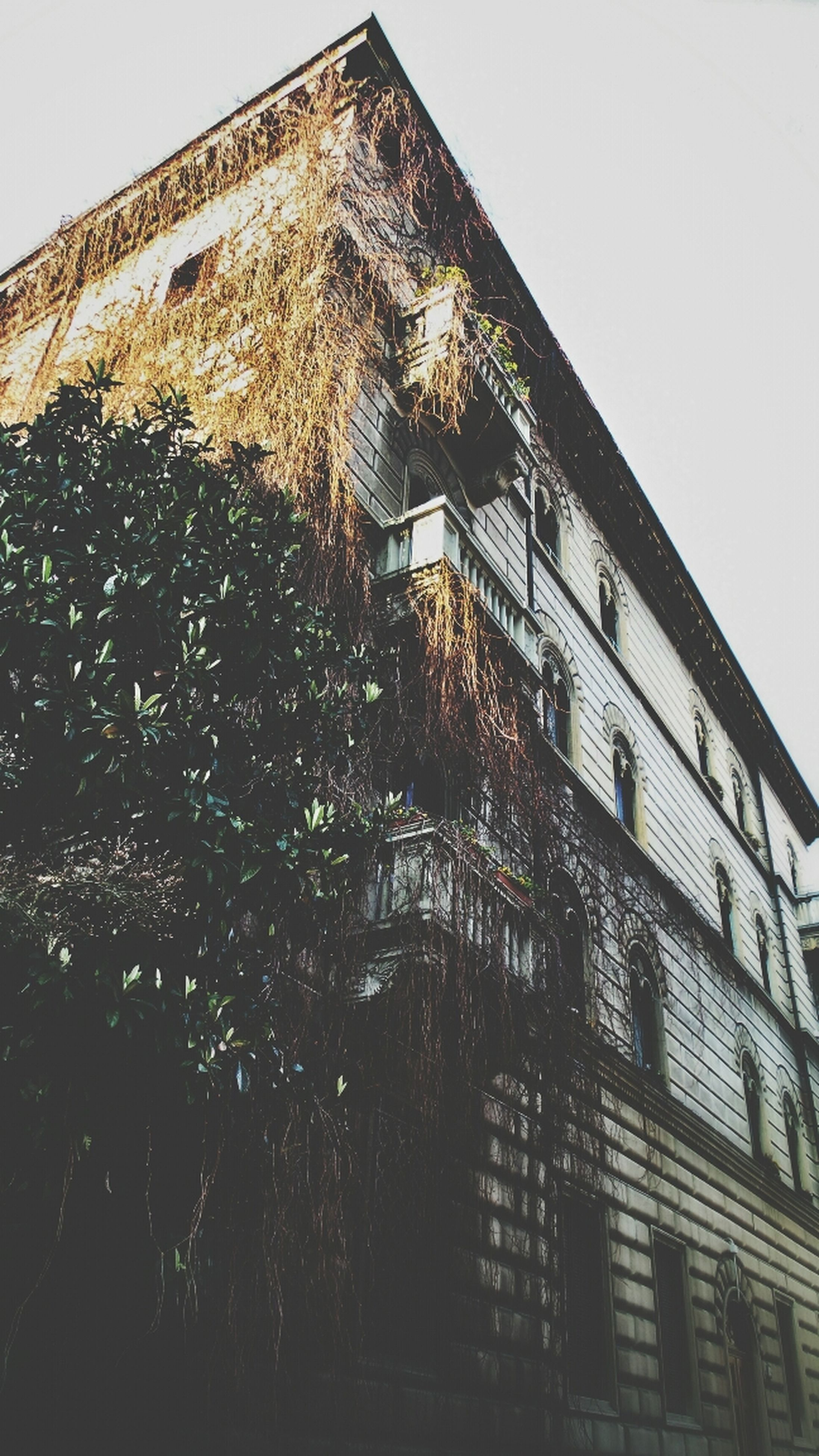 building exterior, architecture, built structure, low angle view, window, clear sky, building, residential building, residential structure, city, sky, house, outdoors, day, no people, tree, brick wall, exterior, sunlight, glass - material
