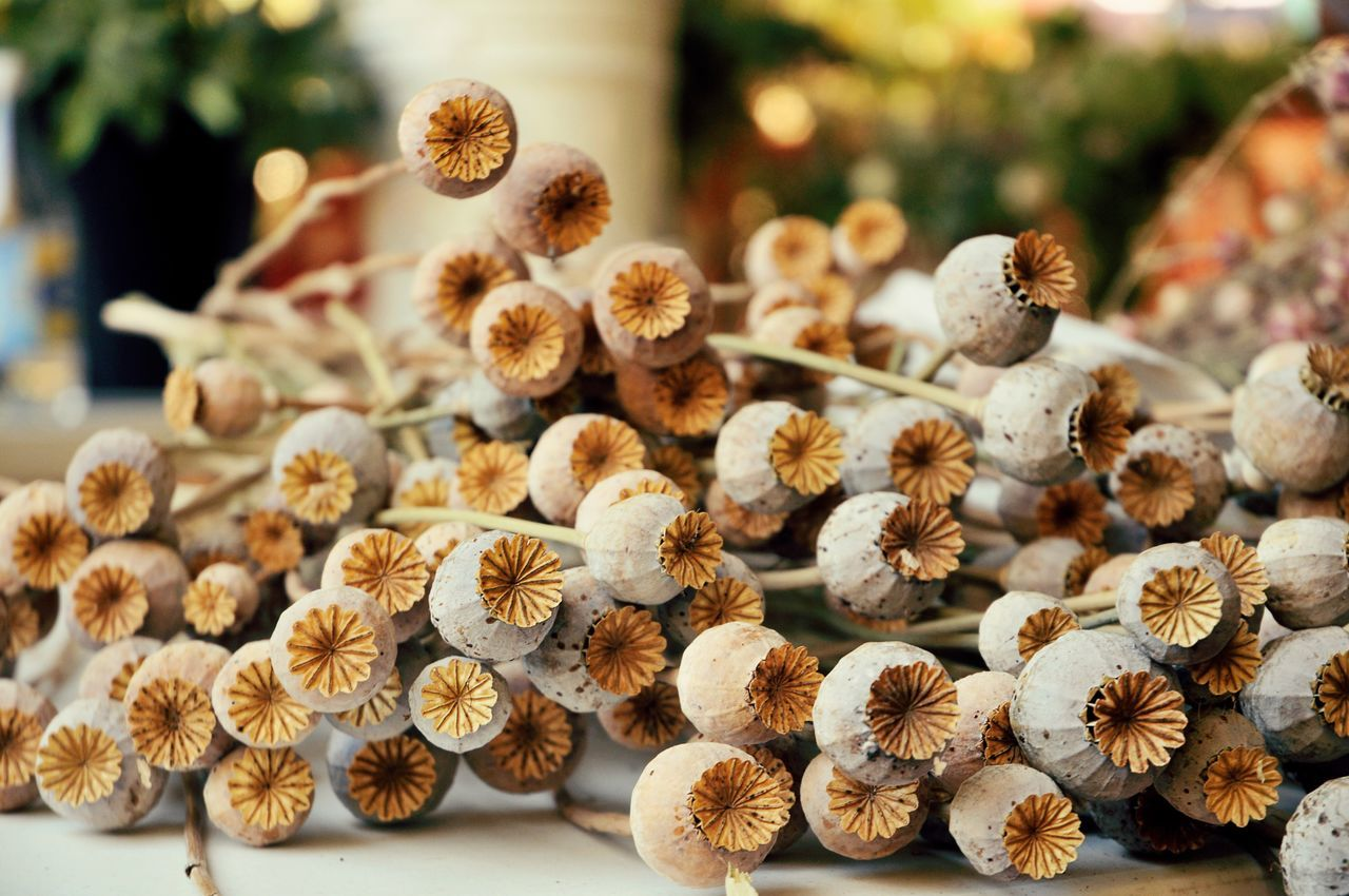 Large Group Of Objects Close-up No People Nature Outdoors Christmas Tree Day Dried Plant Opium Poppies Poppy Pod Dried Flowers