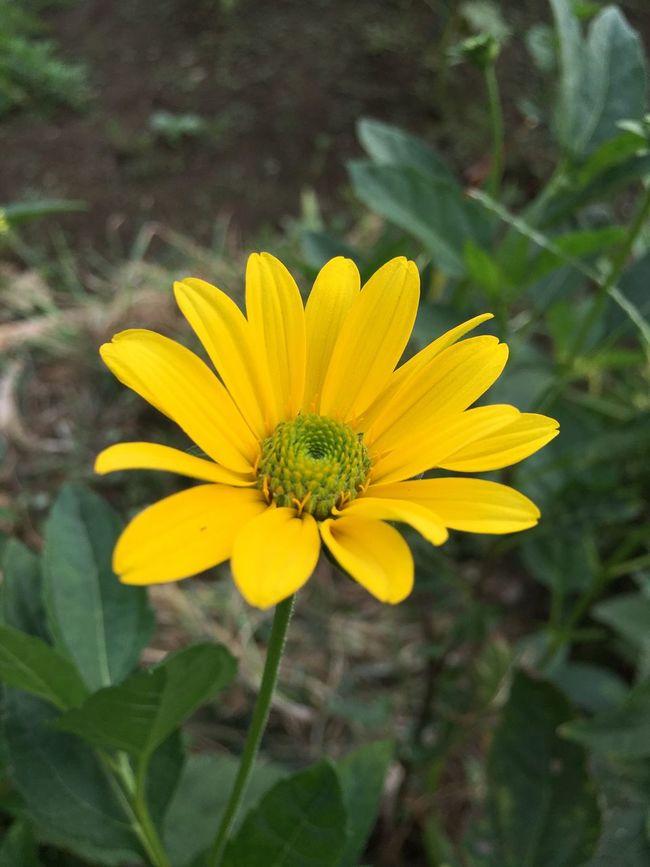 写真が好き PhotobyTaka Love ✨☺️✨ Flower 咲いている Japan