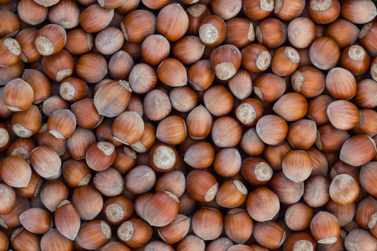Hazelnuts background Autumn Fruits Background Texture Brown Close-up Fall Food Foodphotography Freshness Fruit Grape Hazelnuts Healthy Eating Leaf Nuts Organic Pattern, Texture, Shape And Form Ripe Wallpapers