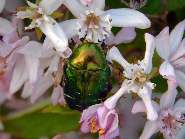 Blooming Close-up Flower Insect Pink Pink And Green Springtime Tavasz