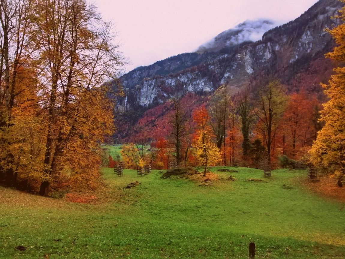 Landscape_Collection Switzerland Autumn🍁🍁🍁 Nature_collection Autumn Colors Autumn TreePorn EyeEm Nature Lover Taking Photos