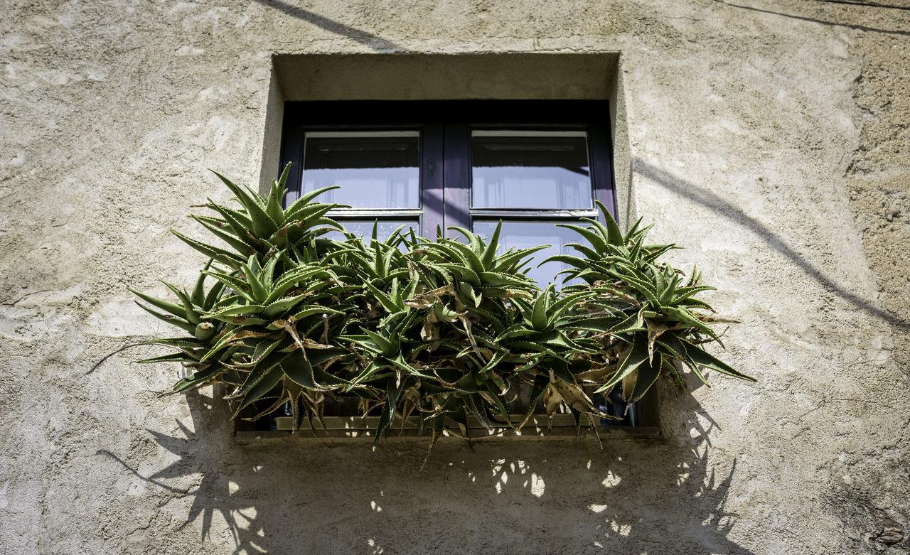 Window decoration in Peralada, Spain Architeture Cactus Catalan Catalunya Cataluña Decoration España Español Old Peralada Plant SPAIN Spanien Ventana Window