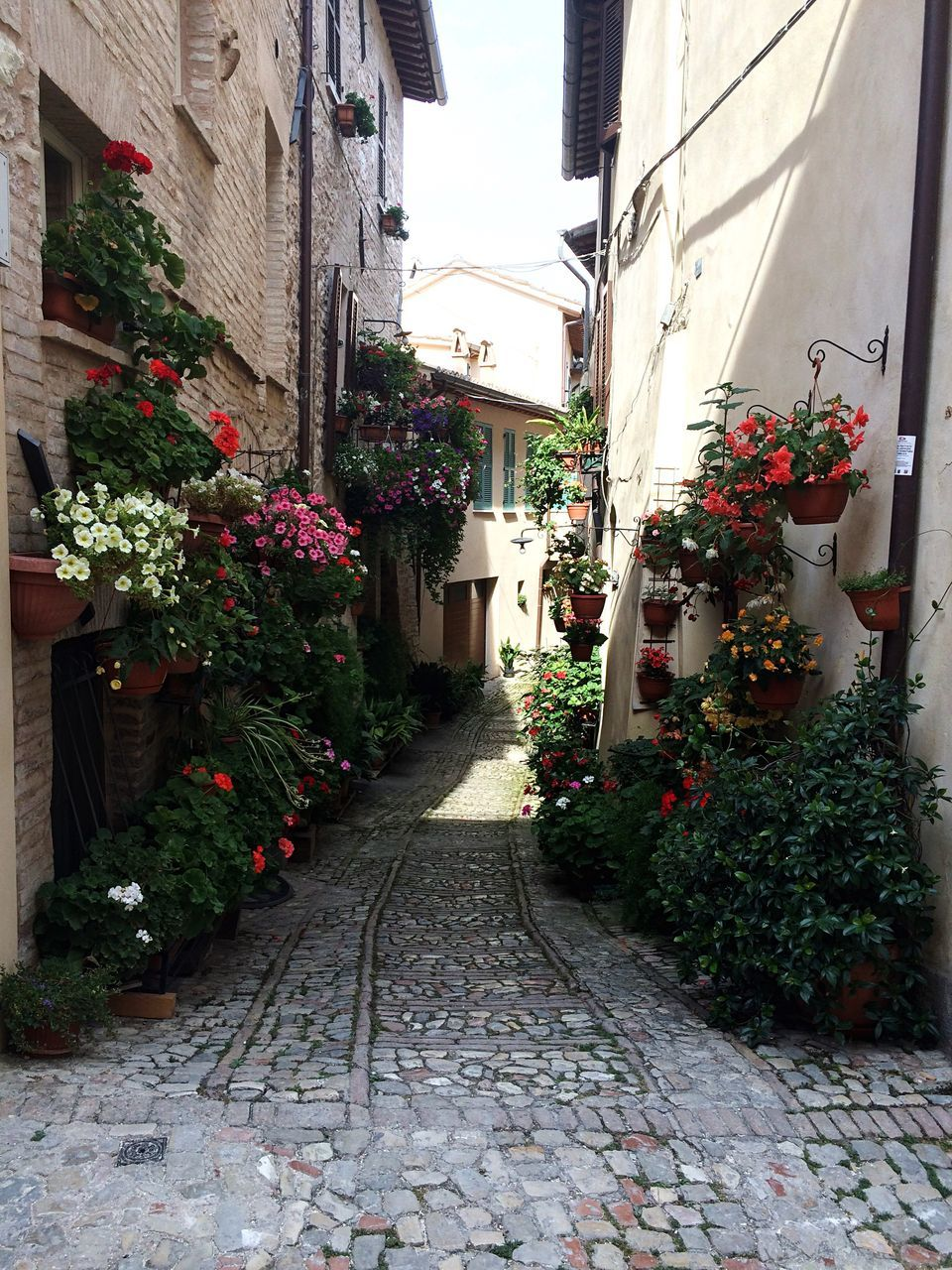 building exterior, architecture, built structure, plant, cobblestone, the way forward, outdoors, no people, day, flower, nature