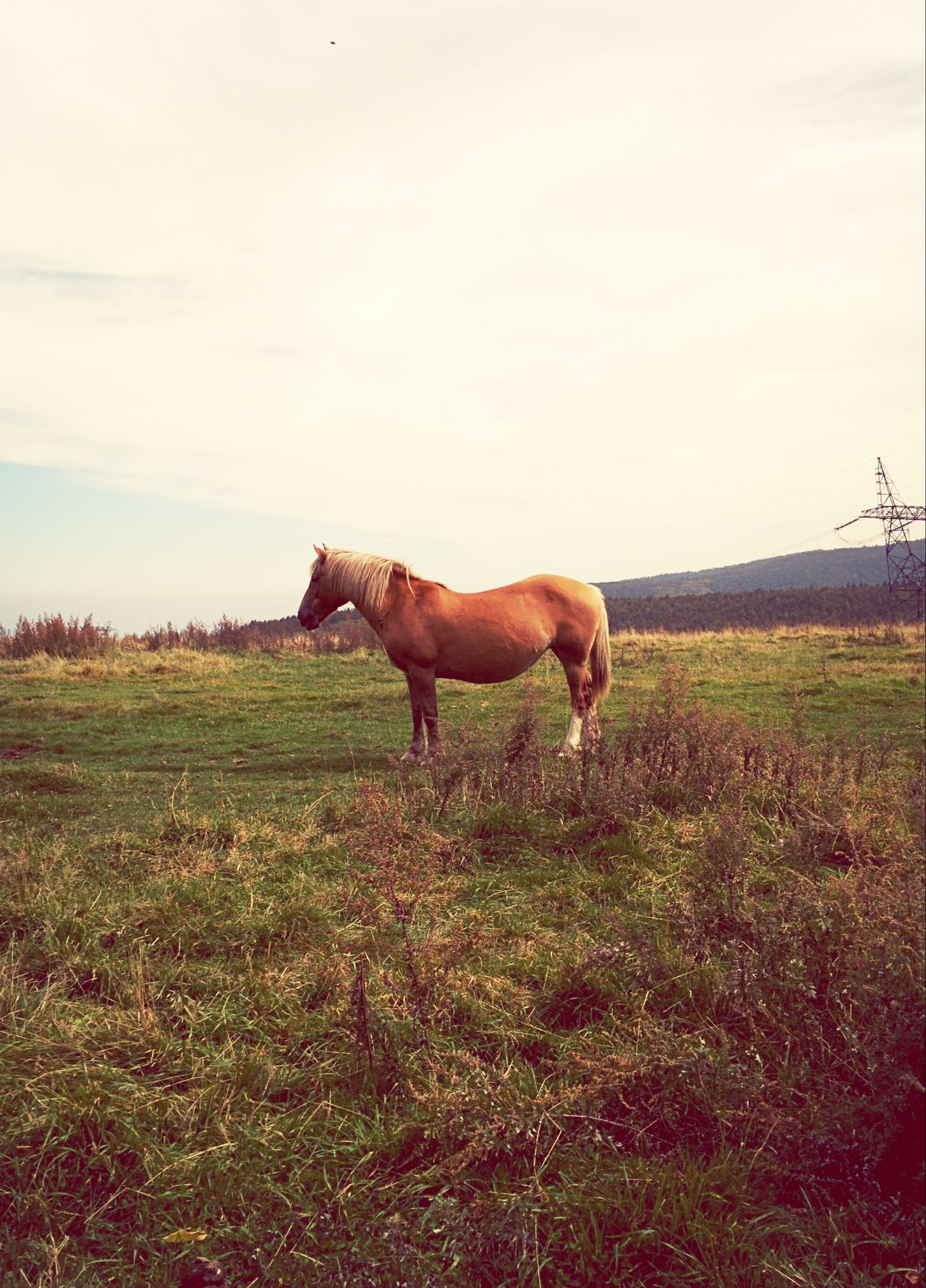 Beautiful stock photos of meadow, Animal Themes, Beauty In Nature, Cloud, Day