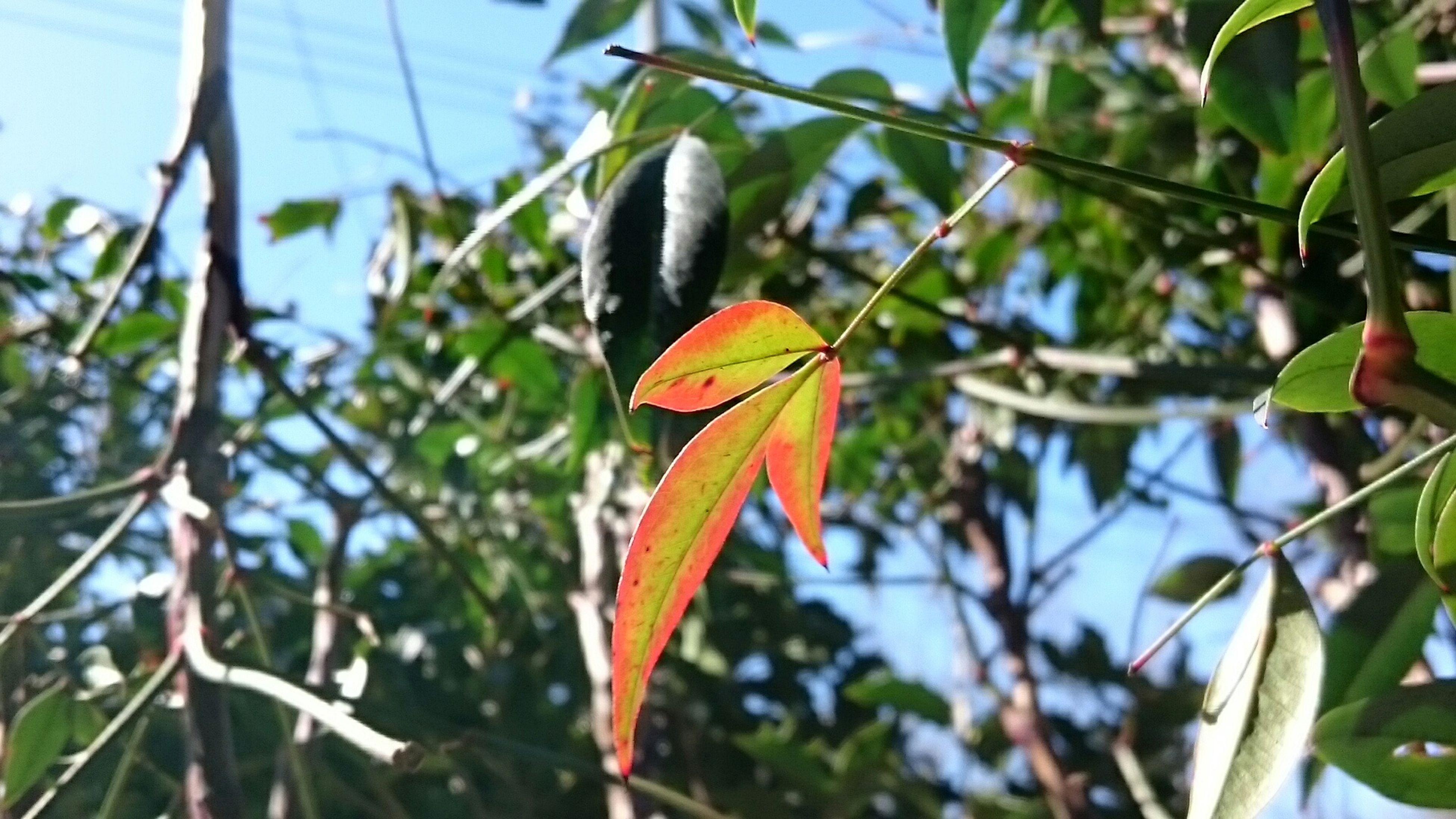 色付いた葉 枝 葉っぱ