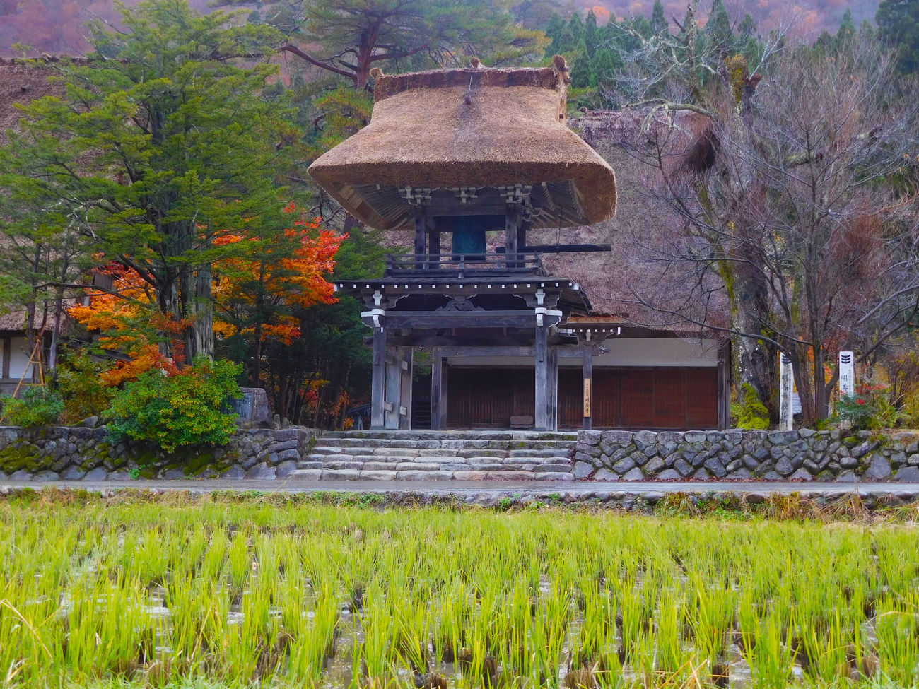 Architecture Beauty In Nature Building Exterior Built Structure Day Flower Gazebo Grass Growth Japan Japanese Garden Nature No People Ornamental Garden Outdoors Plant Shirakawago Gifu Tree Villages Water