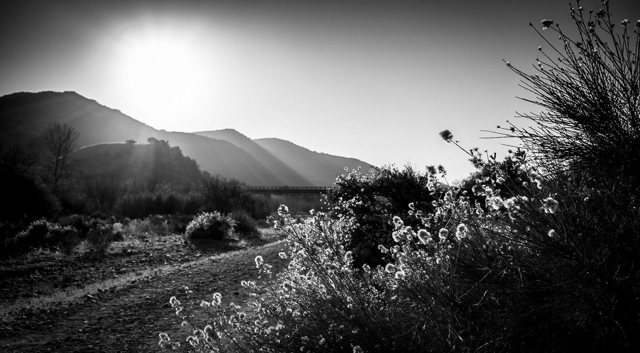 And goodnight from my neck of the woods? EyeEm Nature Lover Sunset_collection Landscape_Collection The EyeEm Facebook Cover Challenge Black & White Blackandwhite Sun_collection Light And Shadow My Best Photo 2014 The Great Outdoors - 2015 EyeEm Awards Sold Sold On Getty Images The KIOMI Collection