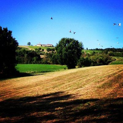 A caccia di #more con Mati sulle #colline dietro casa #scandiano #reggioemilia #lifeisbeautiful #summer2014 #hills #italy #italiancountryside #campagna #iphonography