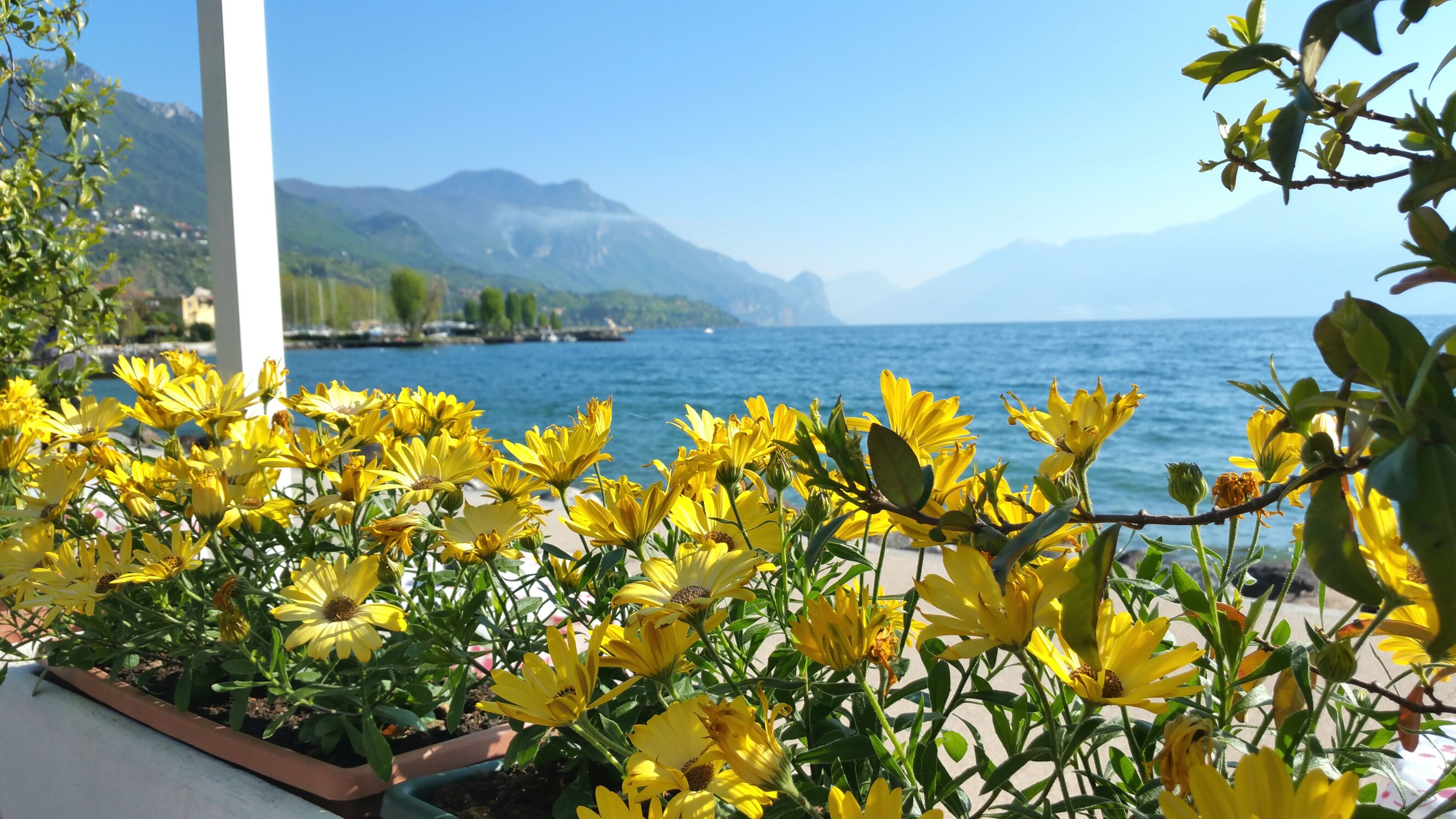 mountain, flower, water, beauty in nature, yellow, nature, blue, sea, scenics, growth, sky, tranquil scene, clear sky, tranquility, mountain range, plant, lake, tree, freshness, day
