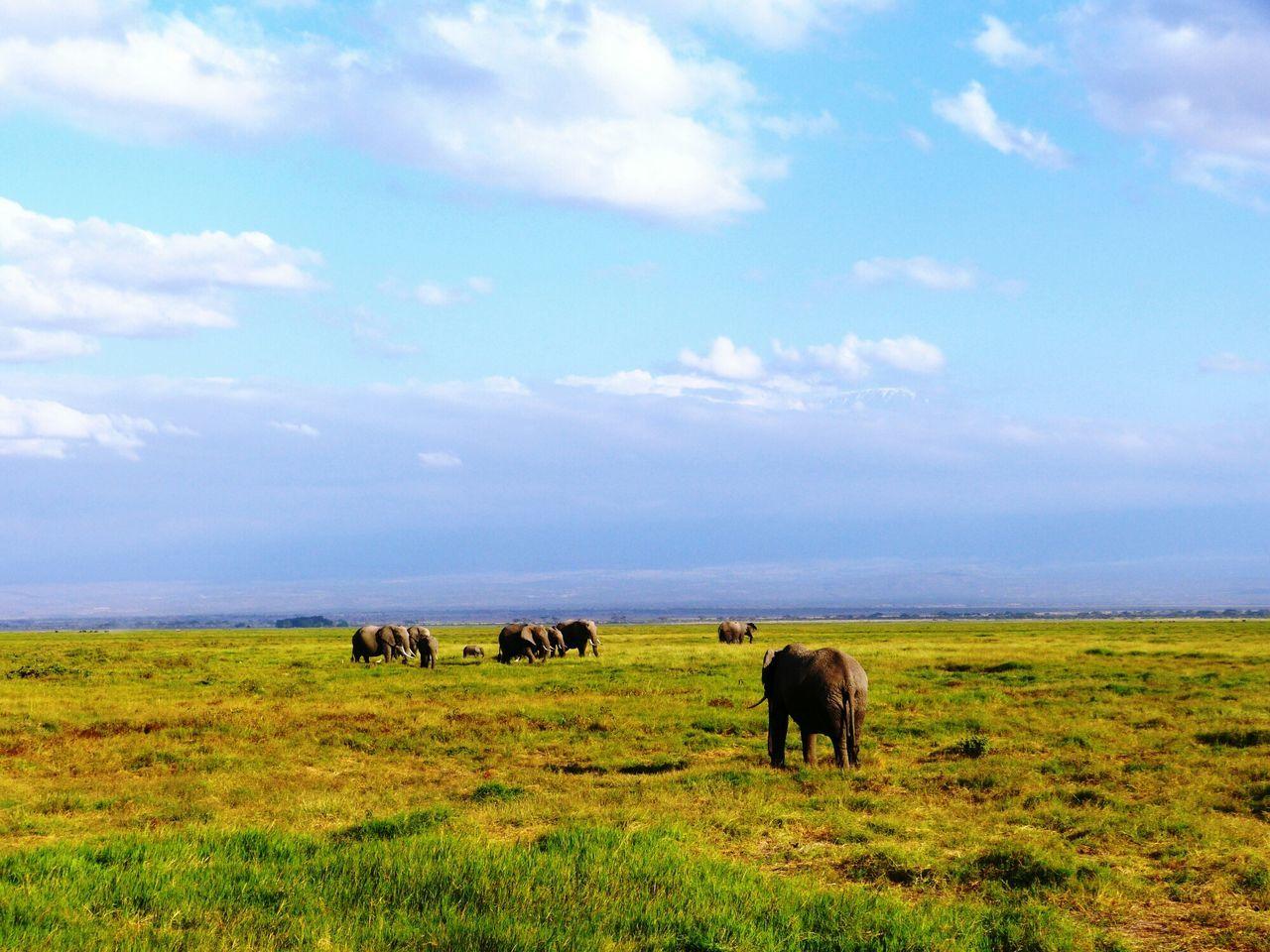 Taking Photos Kenya Animal_collection Africa Safari Share Your Adventure Nature Photography Elephants Savannah Face Of Summer