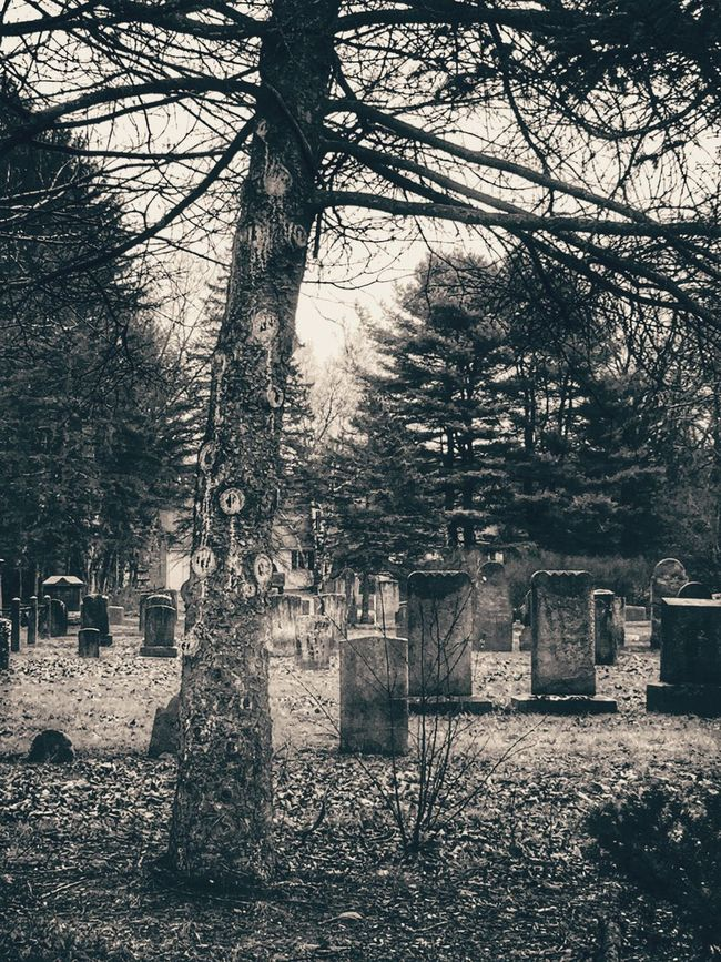 Shades Of Grey Blackandwhite Tree Cemetery Graveyard Beauty Tree_collection  Autumn Bleak Landscape_Collection Tombstone