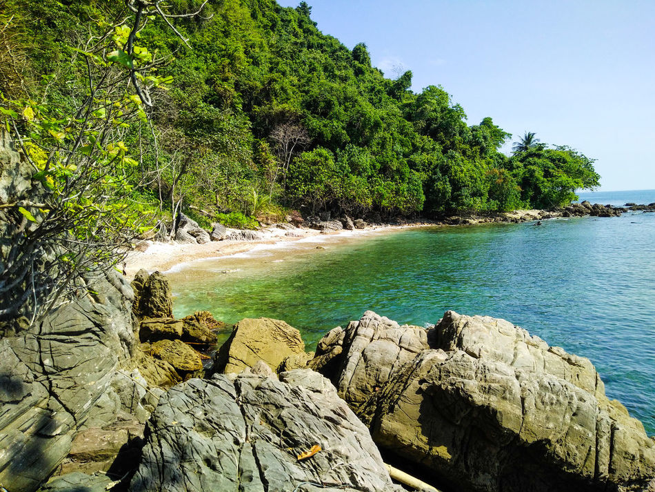 Tree Water Nature Rock - Object Sea Beach Day Tranquility Outdoors Tranquil Scene Beauty In Nature No People Sunlight Scenics Sky