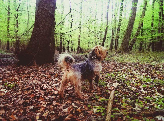 Mein Kleiner <3 Dog Naturelovers Forrest Wald Germany Waldspaziergang Wachsam Aufderjagt