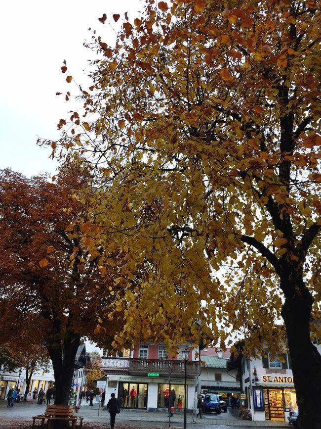 Garmisch-partenkirchen Tree City Autumn Travel Visiting Walking Around Streetphotography Yellow Leaves October