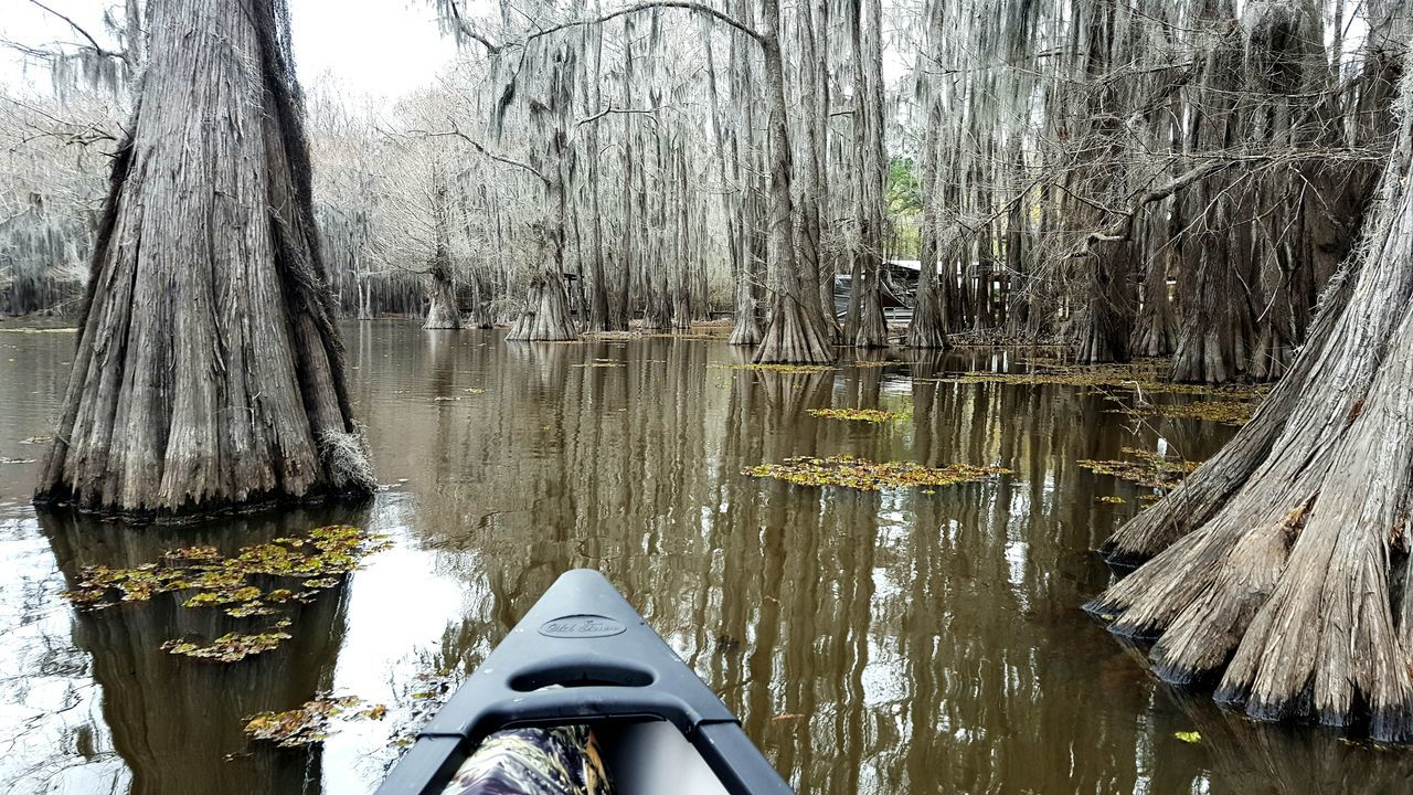 Caddo Lake Canoeing Outdoors No People Mode Of Transport Water The Great Outdoors - 2017 EyeEm Awards