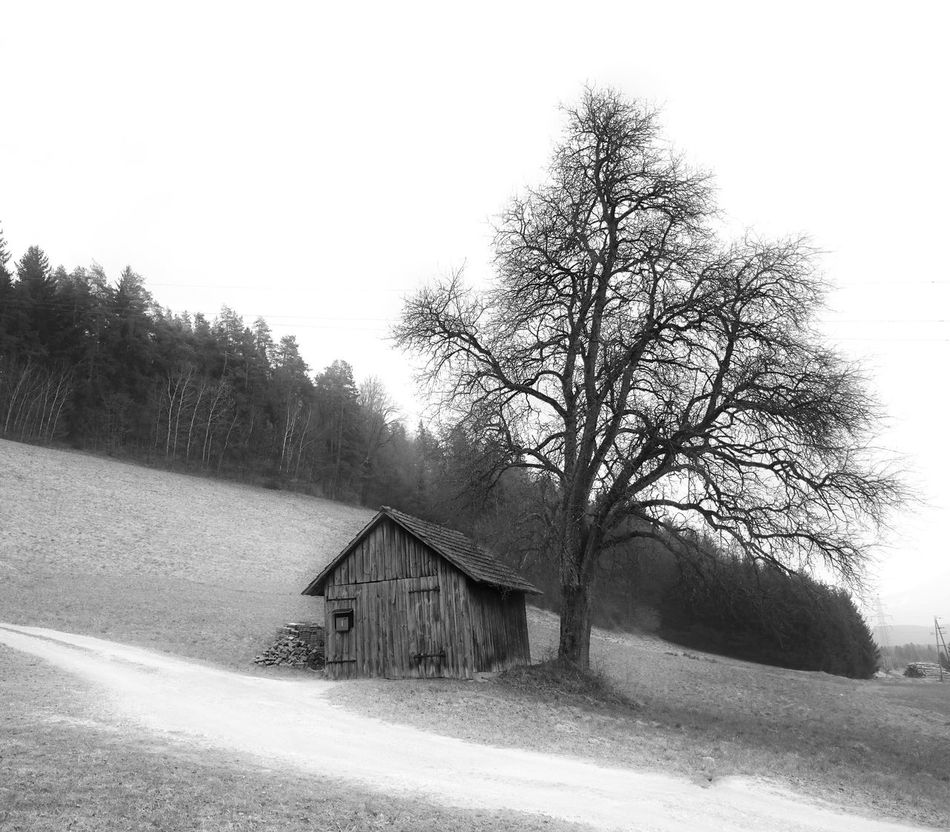 Little barn and a tree Bnw_captures Barnaholics Rural Scenes Trees Tree_collection  Monochrome Monday Monochrome