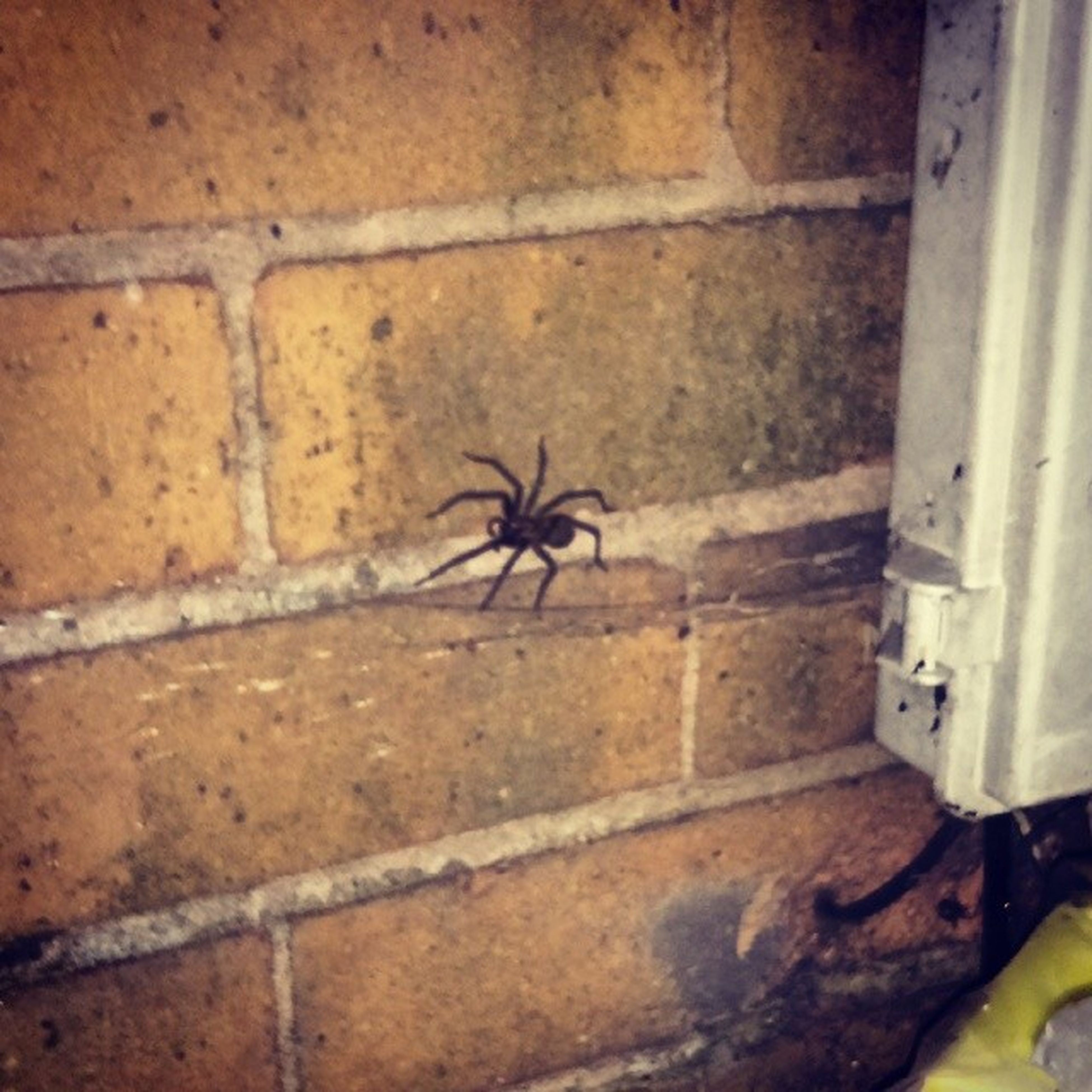 one animal, wall - building feature, animal themes, insect, architecture, built structure, animals in the wild, close-up, indoors, wildlife, wall, brick wall, no people, day, building exterior, high angle view, spider, damaged, abandoned