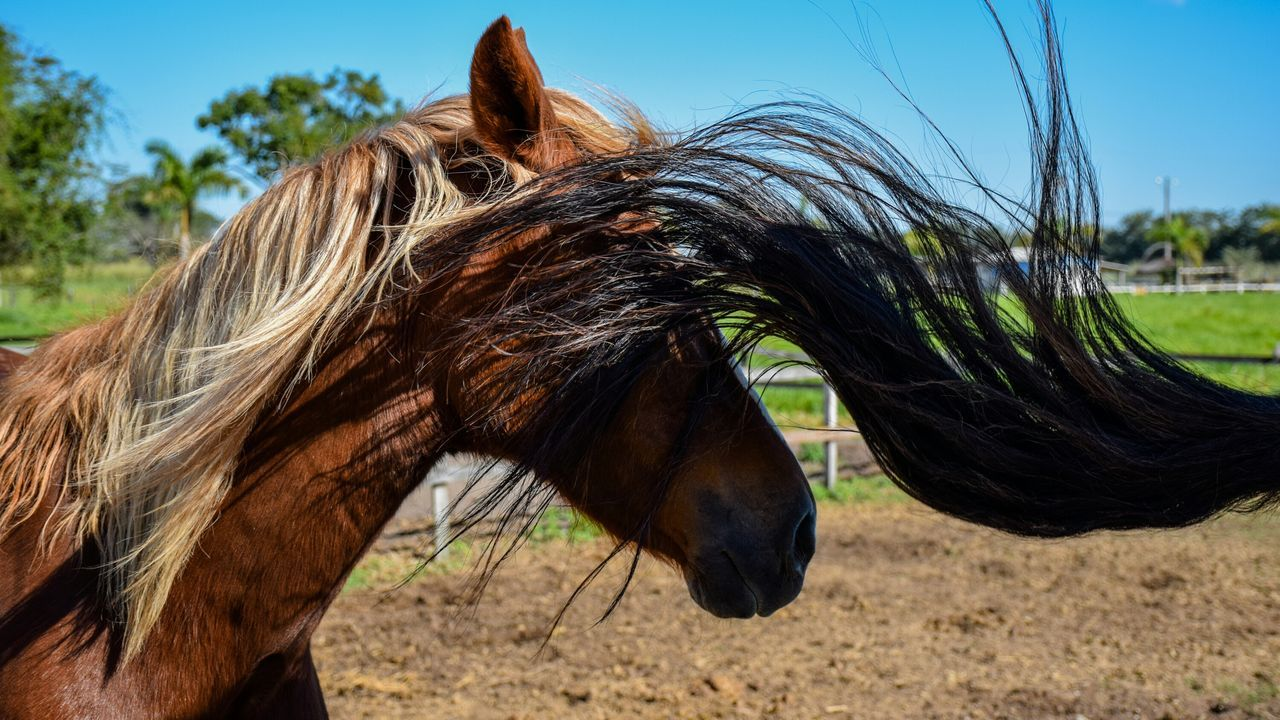 Ops... Horse Horses Horse Life Horse Photography  Animals Animal Animal Themes Animal Photography Farm Farm Life Farm Animals Rural Rural Scenes Rural America Rural Life Photography Farm Photos Rural Scene Relaxing Farms EyeEm Best Edits Incidental Art Incident Incidentally Ops!