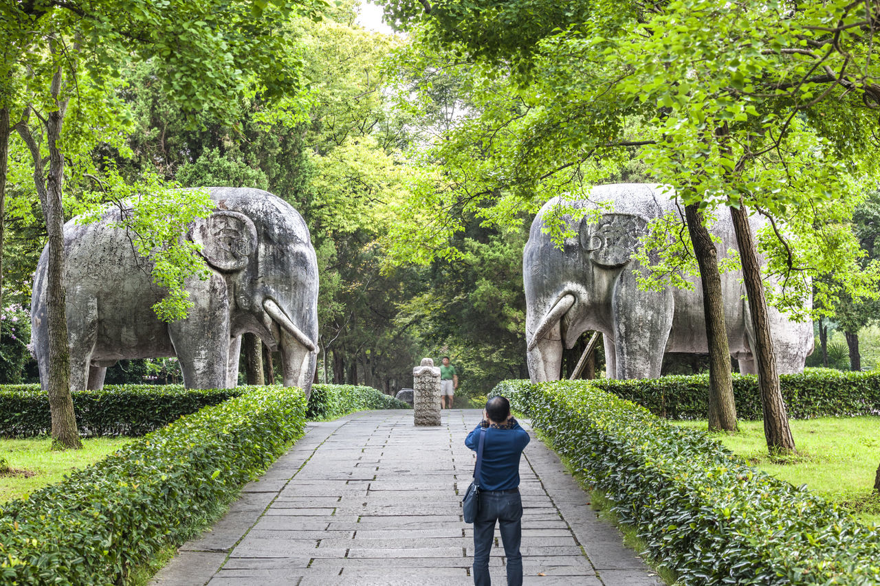 Hidden Gems-Shinto of Ming Xiaoling mausoleum Beauty In Nature Famous Scenic Hidden Gems  History Ming Xiaoling Mausoleum Nanjing Relic Shinto Spots The Way Forward Tourist Attractions Tranquility Travel Tree Walkway Zhu Yuanzhang Zhu Yuanzhang Beast Cemetery Cemetery Famous Places Ming Dynasty Monuments The First Emperor