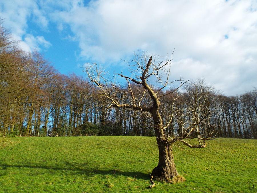 Haigh Hall Wigan United Kingdom Trees Depth Of Field